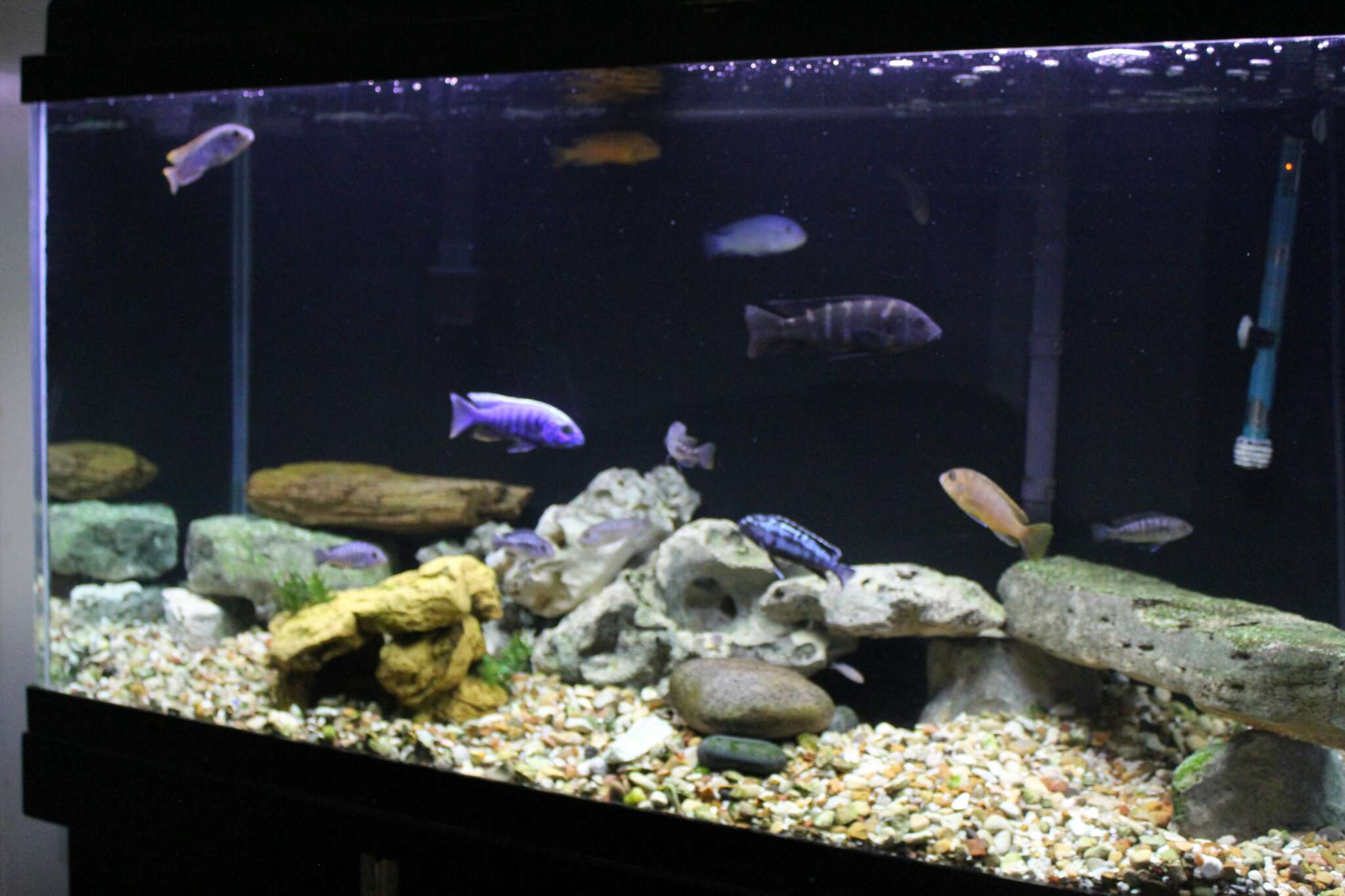 90 gallon aquarium for sale in ennis tx 5miles buy and for Used 300 gallon fish tank for sale